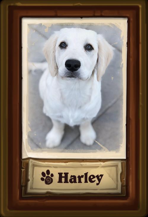 Харли- Решает художественные задачи